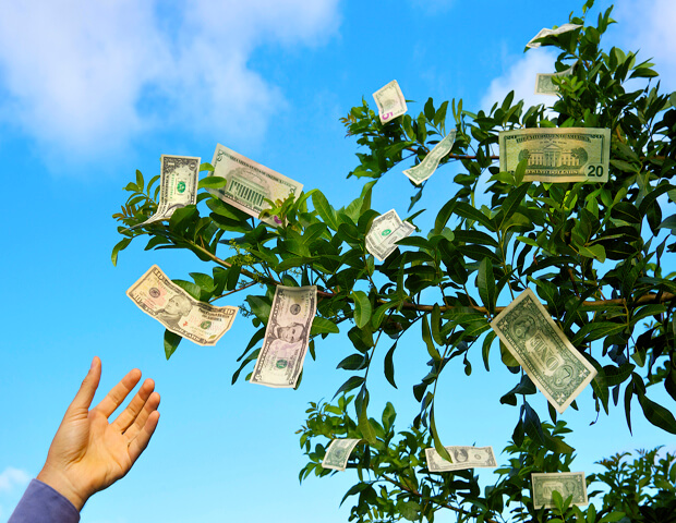 how to grow your own money tree